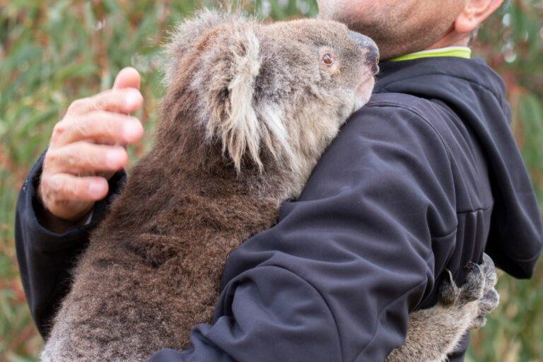 Animal Rescue Charity - DonateTo Animal Charity