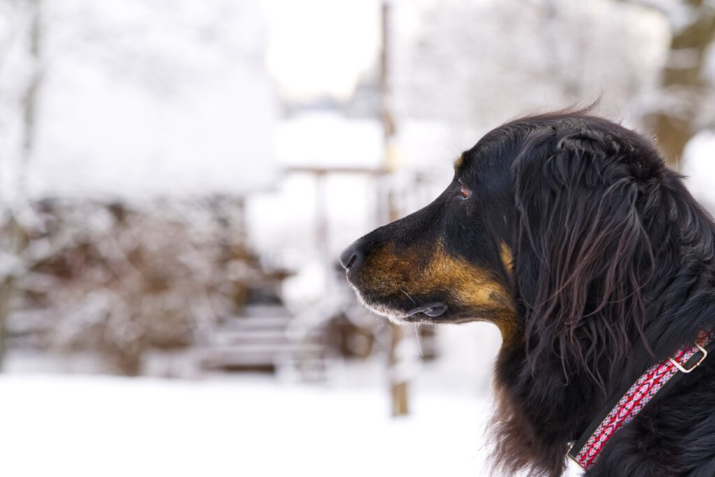 5 Things You Can Do To Help Lost Dogs