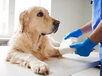Medical Care | Animal Rescue Charity | Donate to animal charity