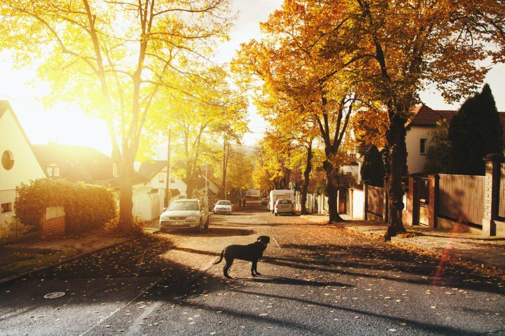 Providing Safety & Shelter to Street Dogs