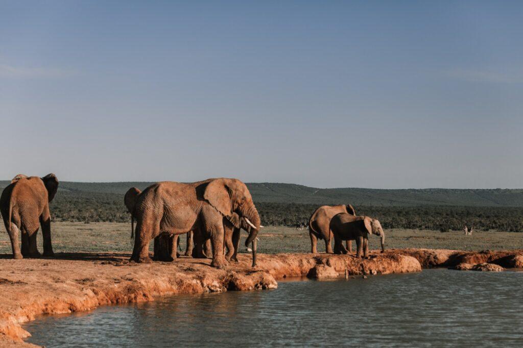 Save Elephant Charity