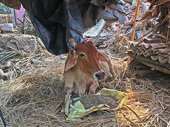 Animal Rescue Charity | Animal welfare