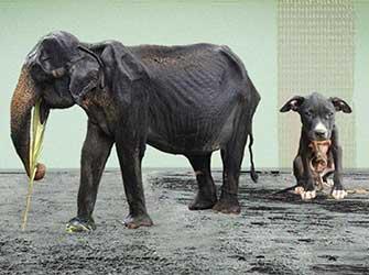 Animal Cruelty | Cruelty Response | Animal Rescue Charity