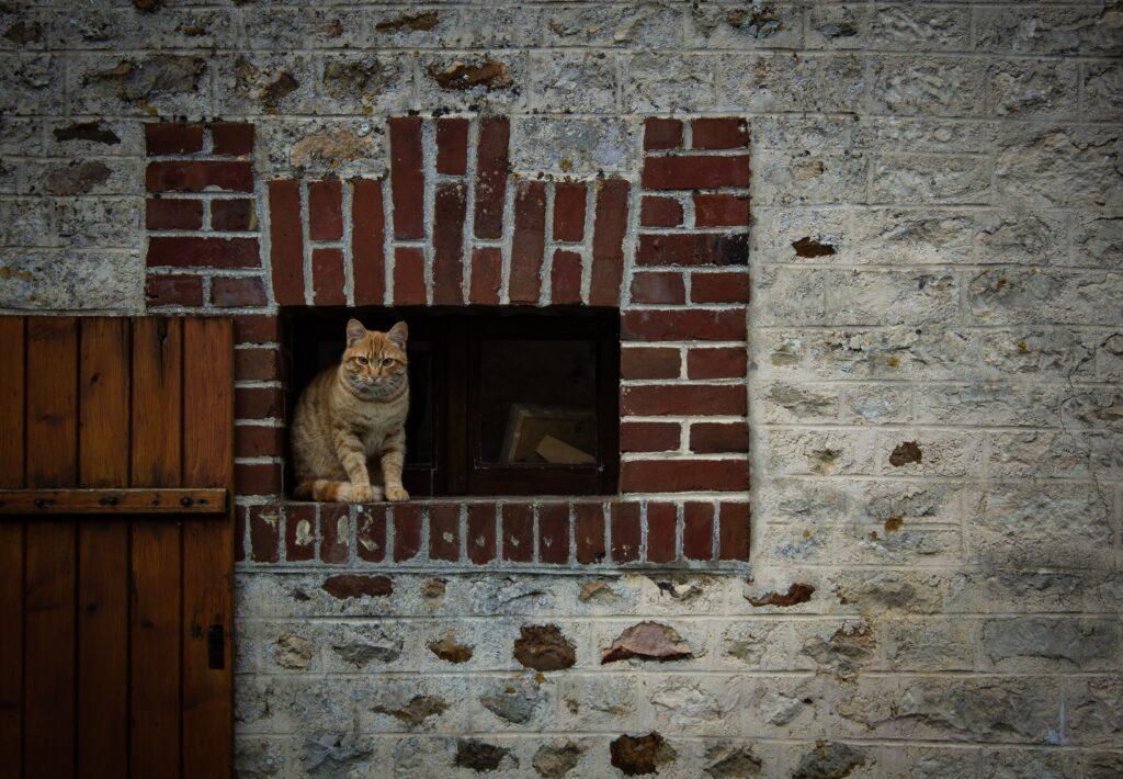 World Stray Animals Day | Stray Animals | Stray cat rescue | Stray dog rescue | Animal Charity | Animal Rescue Charity