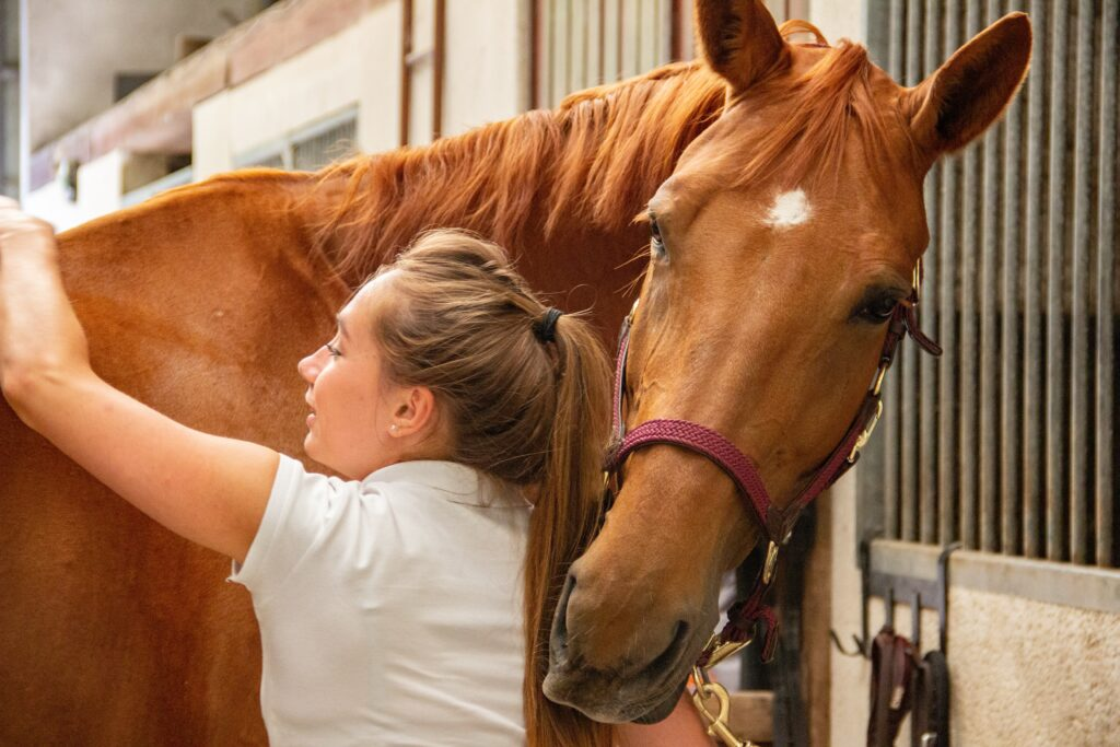 Taking Care of Horses | Animal Care | Animal Rescue Charity