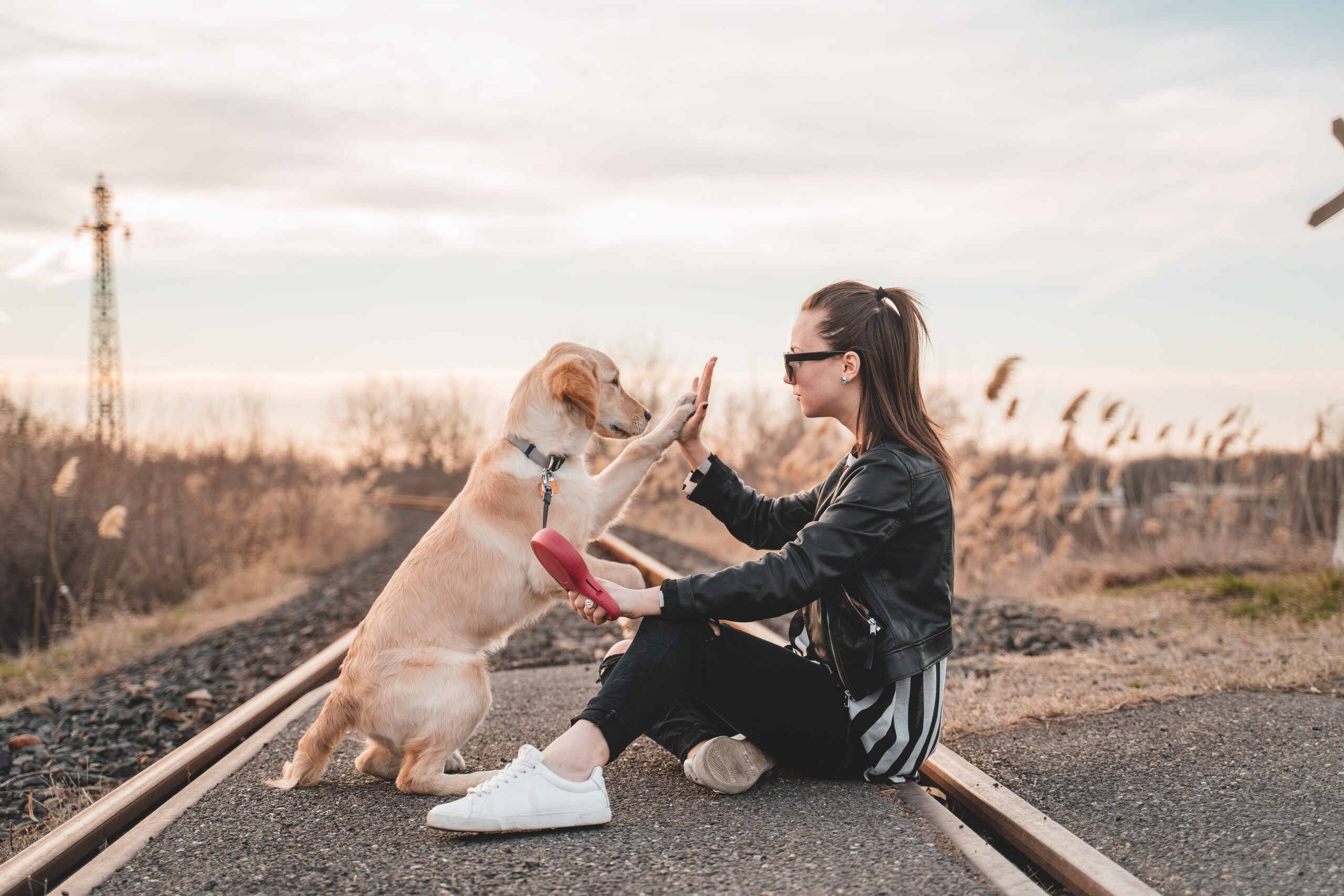 Human Animal Bond Benefits People And Pets | Benefits of pets | Animal Charity | Benefits of Having A Dog | Animal Rescue Charity